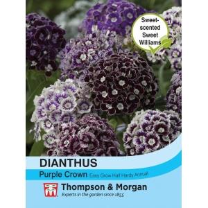 Dianthus Purple Crown