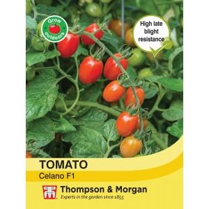 Tomato Celano