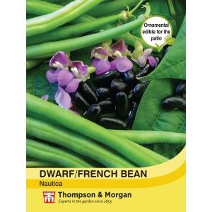 Bean Dwarf Nautica