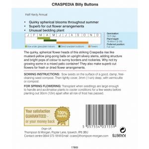 Craspedia Billy Buttons