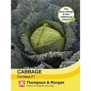 Cabbage Savoy Cordesa F1 Hybrid