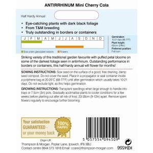 Antirrhinum Mini Cherry Cola