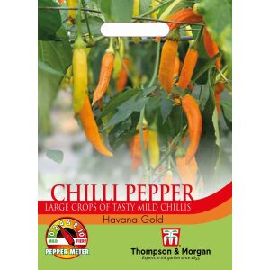 Pepper Chilli Havana Gold