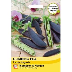 Climbing Pea Purple Magnolia