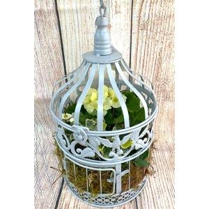 Planted Hanging Birdcage Medium