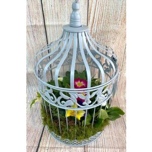 Planted Hanging Birdcage Large