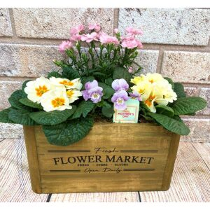 Planted Hanging Baskets & Containers