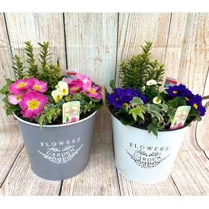 Flowers & Garden Bucket 23cm Grey
