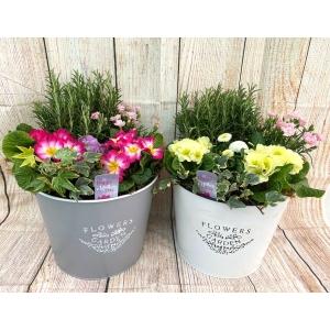 Flowers & Garden Bucket 28cm White