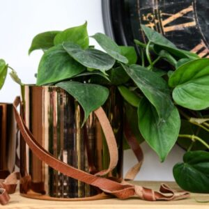 Hanging Copper Planter 15cm