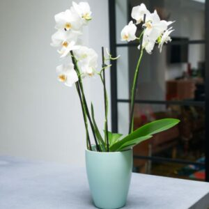 Orchid Planter Mint Green 13cm