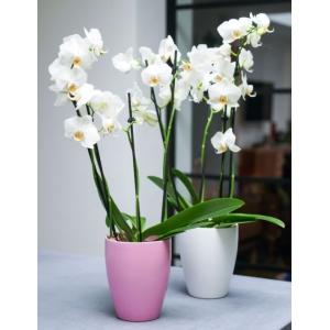 Orchid Planter Pink 13cm