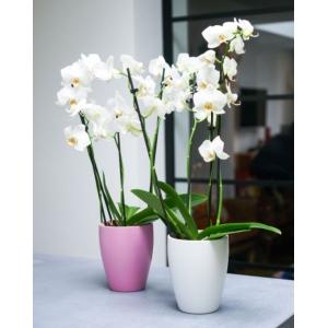 Orchid Planter White 13cm