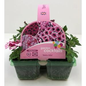 Garden Cocktail Berry Bliss J6PK