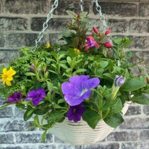 Planted Round Hanging Basket 12″