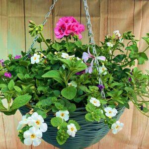 Planted Round Hanging Basket 14″