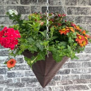 Planted Hanging Cone 12″