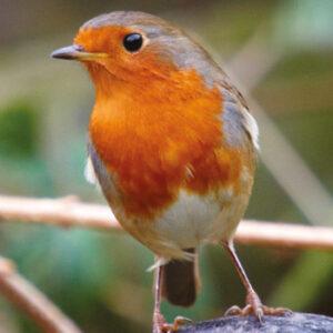 Wild Birdcare