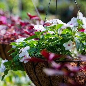 Hanging Garden & Planters